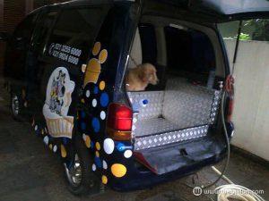 bisnis salon hewan