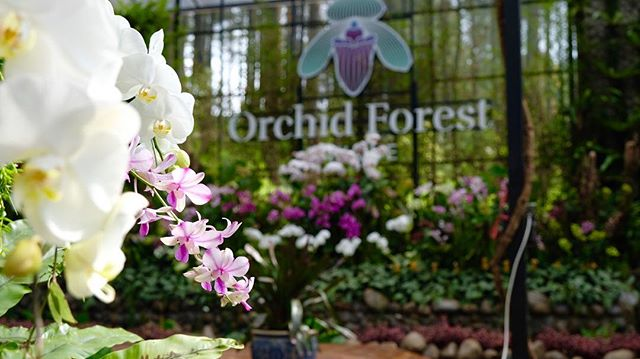 Orchid Forest Cikole (IG orchidforestcikole)