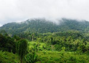 Kawasan konservasi di Kalimantan Timur yang akan dijadikan Ibu Kota pengganti Jakarta (Shutterstock).