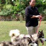 Fadli Zon Pelihara Anjing Malamut Alaska