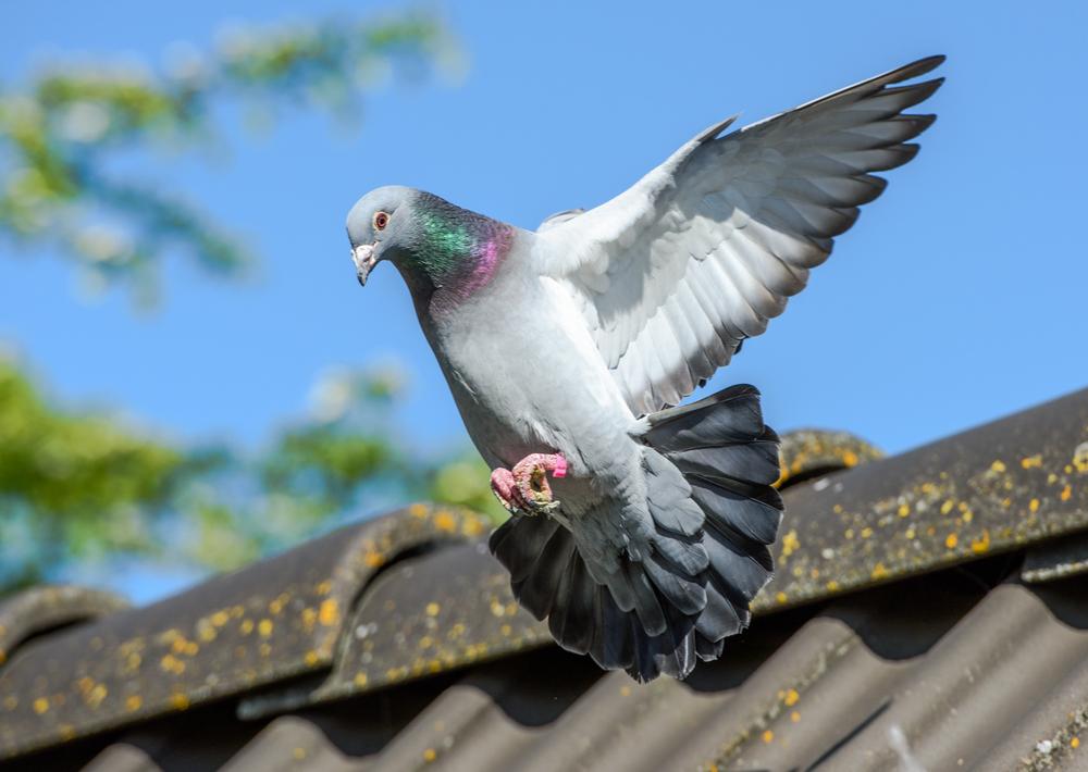 burung termahal
