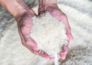 ekspor beras